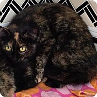 Adopt A Pet :: Misty - West Des Moines, IA