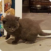 Adopt A Pet :: Charlotte - Minot, ND