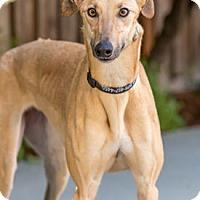 Adopt A Pet :: Twitter - Walnut Creek, CA