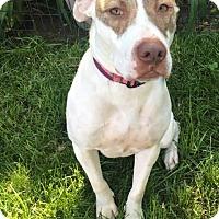 Adopt A Pet :: Frankie - Huntington Woods, MI