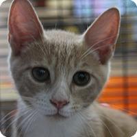 Adopt A Pet :: Joel - Sarasota, FL