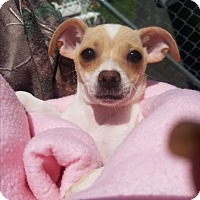 Adopt A Pet :: ANNIE - New Windsor, NY