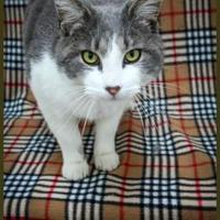 Adopt A Pet :: Taz - Fillmore, IN
