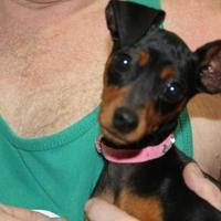 Adopt A Pet :: COCOA - New palestine, IN