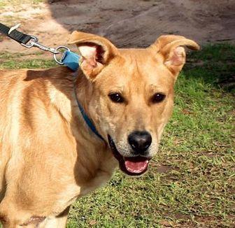 Labrador Retriever Mix Dog for adoption in Enterprise, Alabama - Jonesy