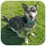 Photo 3 - Australian Cattle Dog Mix Dog for adoption in San Clemente, California - LILLY