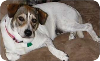 Border Collie Mix Dog for adoption in Portsmouth, Rhode Island - Barbie-w/ video! Meet me!