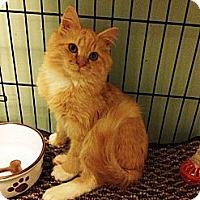 Adopt A Pet :: Ray - Port Republic, MD