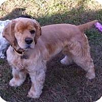 Adopt A Pet :: JD - Sugarland, TX