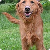 Adopt A Pet :: Dutchess - Foster, RI