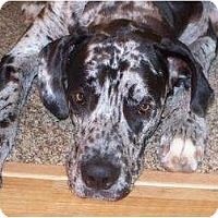 Adopt A Pet :: Miles - Inver Grove Heights, MN