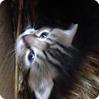 Adopt A Pet :: Angelica - Whitestone, NY
