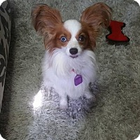 Adopt A Pet :: Aries - Saskatoon, SK