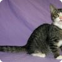Adopt A Pet :: Lucius - Powell, OH