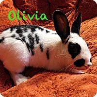 Adopt A Pet :: Olivia - Elizabethtown, KY