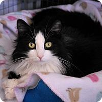 Adopt A Pet :: Mandy - Winchendon, MA