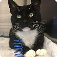 Adopt A Pet :: Ms. Millie - Bridgewater, NJ