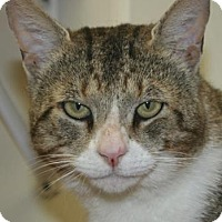 Adopt A Pet :: Jerry - Potsdam, NY
