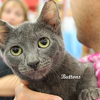 Adopt A Pet :: Buttons - Wichita Falls, TX