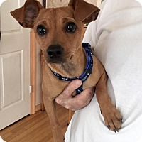 Adopt A Pet :: Jack Daniels - Orangeburg, SC