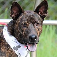 Adopt A Pet :: Mario - San Mateo, CA