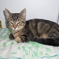 Adopt A Pet :: BERT - Medford, WI
