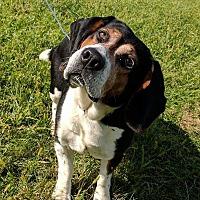 Adopt A Pet :: Fred - Lisbon, OH
