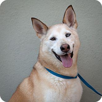 Husky Dog for adoption in Rockaway, New Jersey - misty
