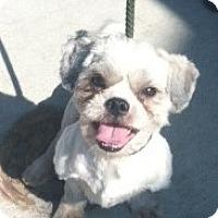 Adopt A Pet :: Kobe - Rockaway, NJ