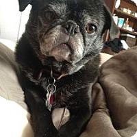 Adopt A Pet :: Olivia - Eagle, ID