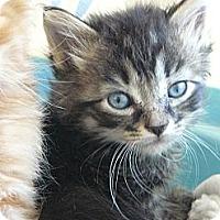 Adopt A Pet :: Atlas - Island Park, NY