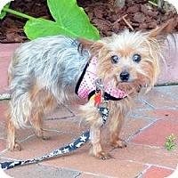 Adopt A Pet :: Nora - Fairfax, VA