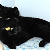 Adopt A Pet :: Vladamir - Novelty, OH