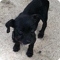 Adopt A Pet :: Mollie - Houston, TX