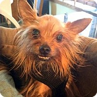 Adopt A Pet :: Kingsley - Beechgrove, TN