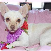 Adopt A Pet :: Reese - Corona, CA