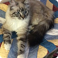 Adopt A Pet :: Jasmin - Davis, CA