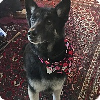 Adopt A Pet :: Murphy - Grafton, MA