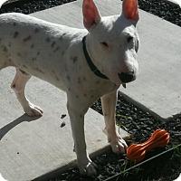 Adopt A Pet :: Tobi - Houston, TX