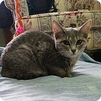 Adopt A Pet :: Skiddles - Lindsay, ON