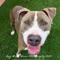 Adopt A Pet :: Nene - Land O'Lakes, FL