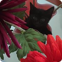 Adopt A Pet :: Ali - Staten Island, NY