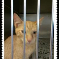 Adopt A Pet :: 36132390 - Los Lunas, NM
