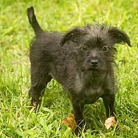 Adopt A Pet :: Melody - Millersville, MD