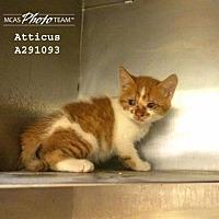 Adopt A Pet :: ATTICUS - Conroe, TX