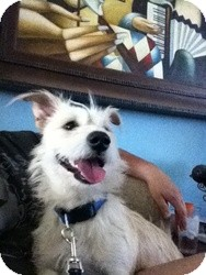 Cairn Terrier Mix Dog for adoption in Las Vegas, Nevada - Lucky