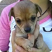 Adopt A Pet :: pup3 - Mesa, AZ