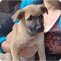 Adopt A Pet :: Costco - Scottsdale, AZ