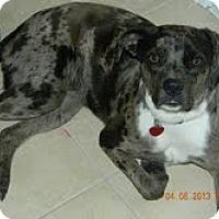 Adopt A Pet :: MARILYN-JJ - Roundup, MT
