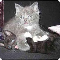 Adopt A Pet :: MJ - Davis, CA